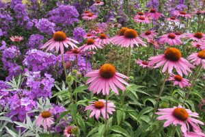 Atlanta Flowers