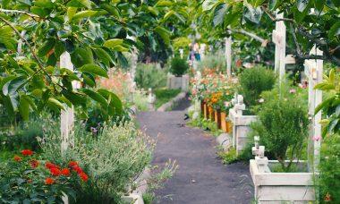 Garden divisions