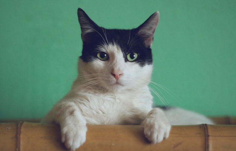 Is Hemp CBD Oil Safe for Cats ...blog.thecbdistillery.com