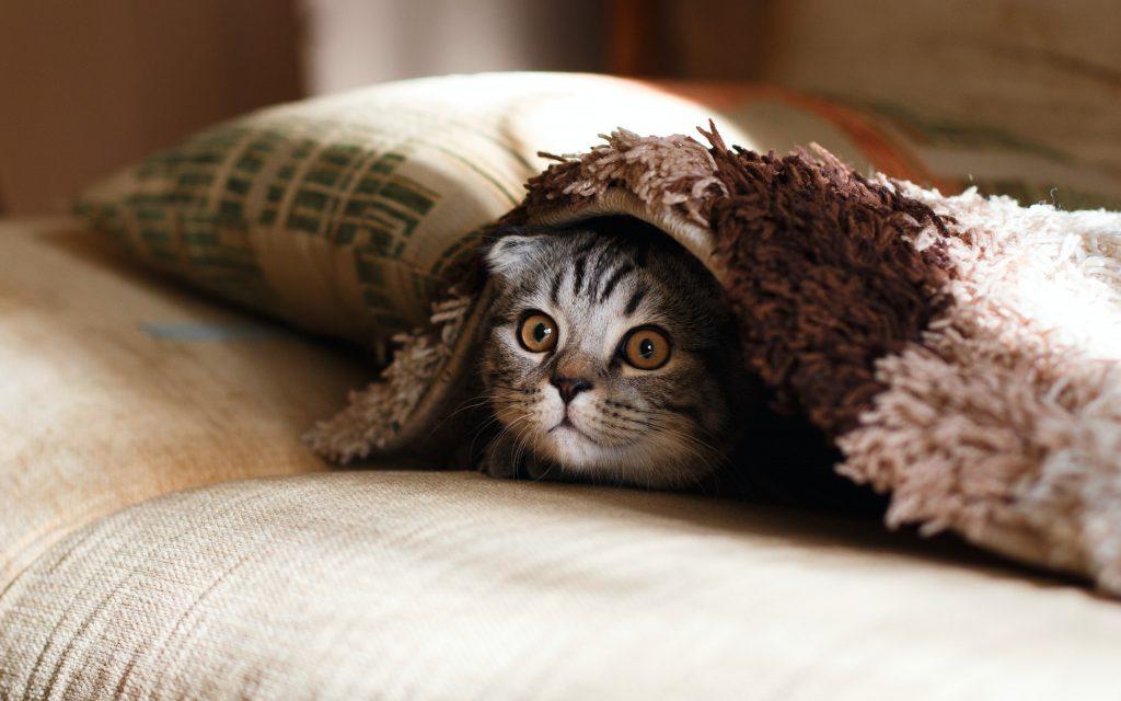 felines and hemp oil