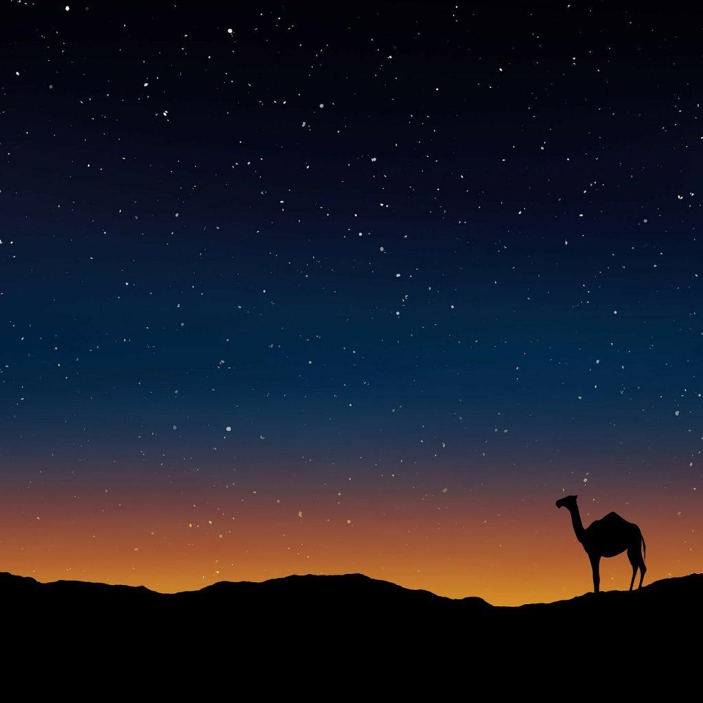 Egypt desert camel