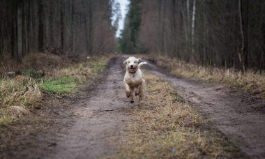 What to Do If Your Dog Escapes When You Let Them Off The Lead