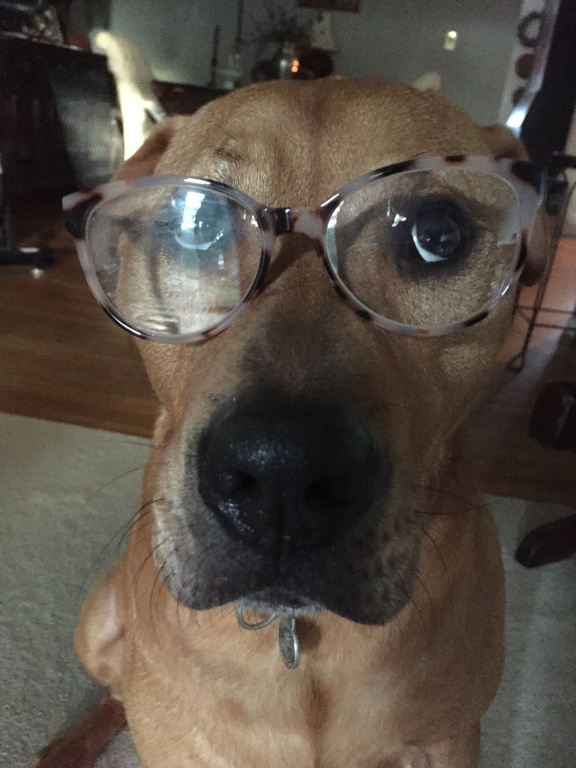 dog in glasses.jpg