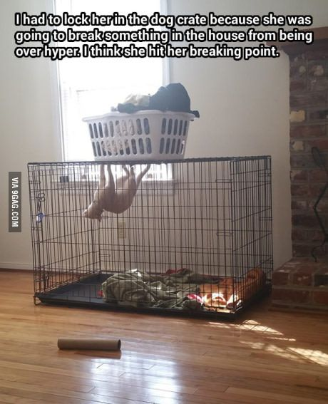 cat in dog cage.jpg
