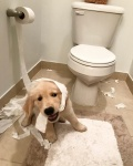 dog and TP.jpg