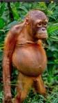 belly monkey.jpg