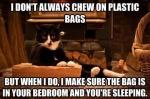 cat and bag.jpg