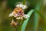 in flower.jpg