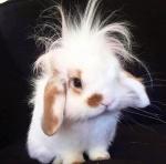 bunny with crazy hair.jpg