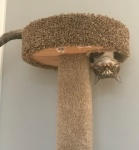 cat in tower.jpg