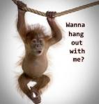 monkey hanging.jpg