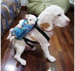 Dog with baby on back.jpg