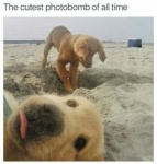 dog photobomb.jpg