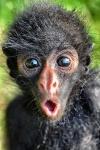 suprise monkey.jpg