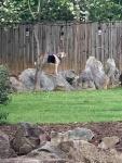 dog on rocks.jpg