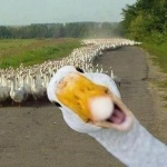 heard of ducks.jpeg