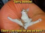 cat in beanbag.jpeg