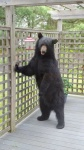 bear and bird feeder.jpg
