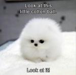 cotton  ball.jpg