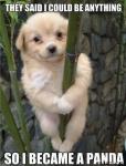 dog on bamboo.jpg