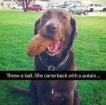 dog and potatoe.jpg