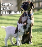 bullies.jpeg