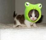 cat frog.jpg