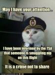 TSA cat.jpg