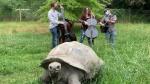 turtle  music.jpg