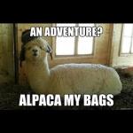 pack my bag.jpg