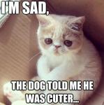 sad kitten.png
