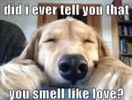 smell like love.jpg