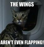 cat on plane.jpg