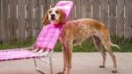 dog in folding chair.jpg