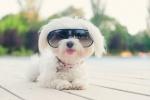 dog in sunglasses.jpg