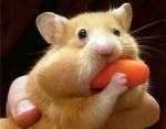 hamster and carrot.jpg