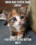 kitten me.jpg