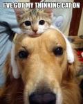 thinking cat.jpeg