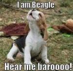 here me baroo.jpg