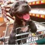 dog in cart.jpg