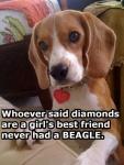 diamonds or beagle.jpg