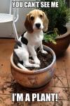 I'm a plant.jpg