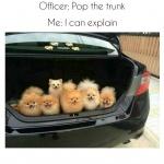 pups in trunk.jpg