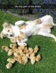 all the chicks.jpg
