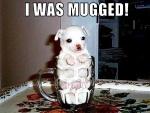 mugged.jpg