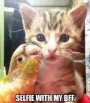 cat and bird.jpg