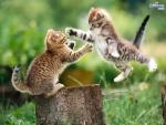 kitten jumping.jpg