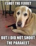 shot the ferret.jpg