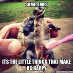 the littlest things.jpg