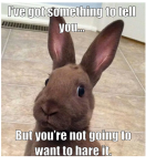 hare it.png